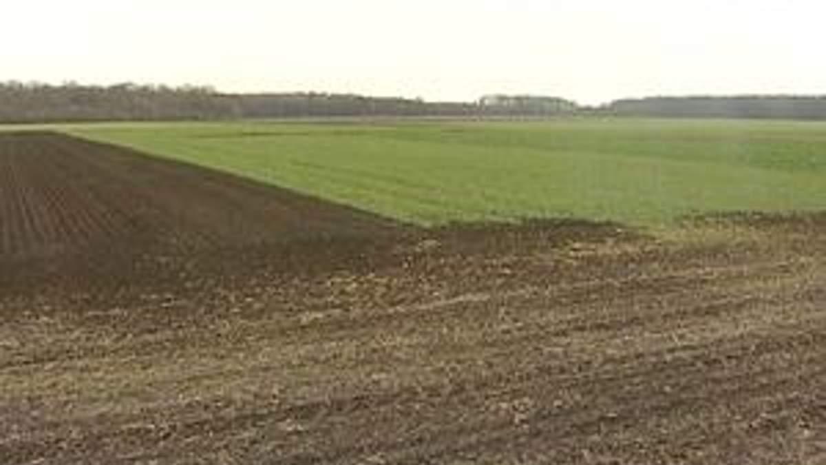 Аграрії зберуть найнижчий за 4 сезони урожай ріпаку