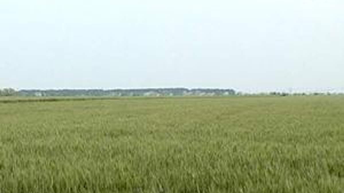 Площі під посіви в Київській області збільшать на 30%