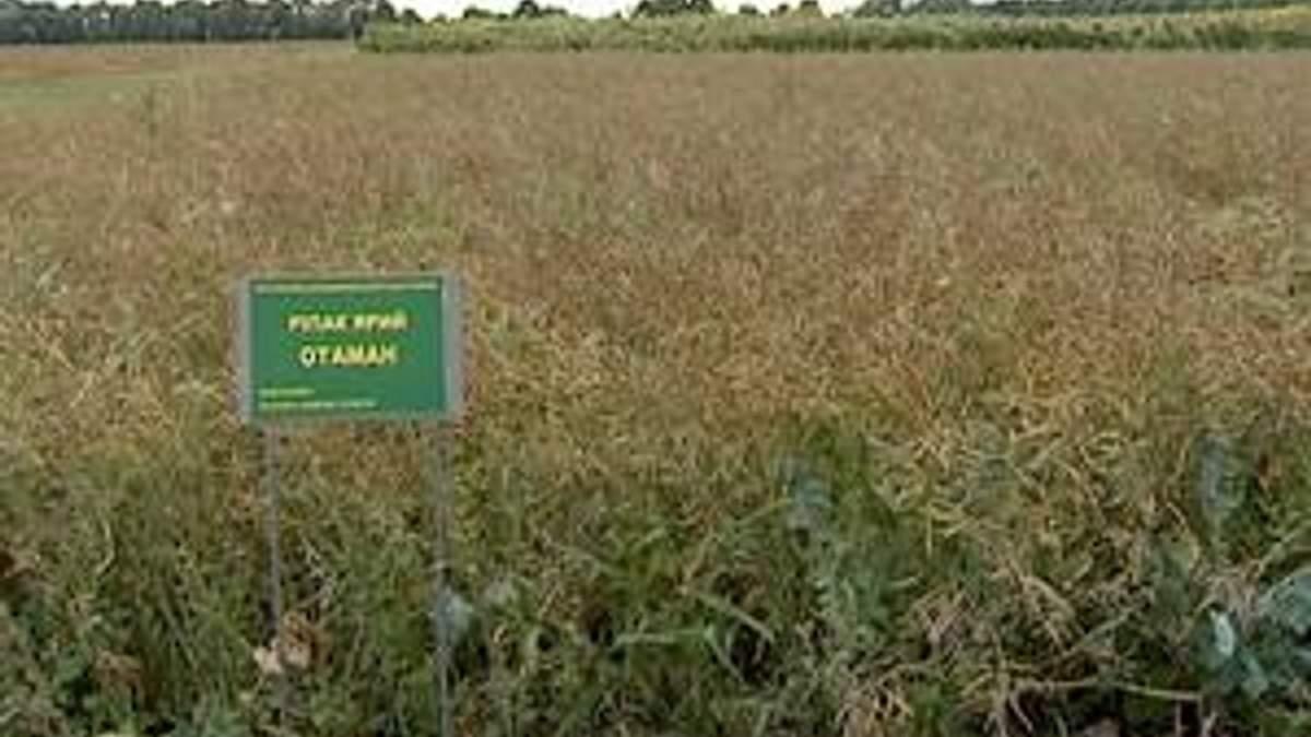 Присяжнюк пропонує вирощувати буряки і ріпак на біопаливо