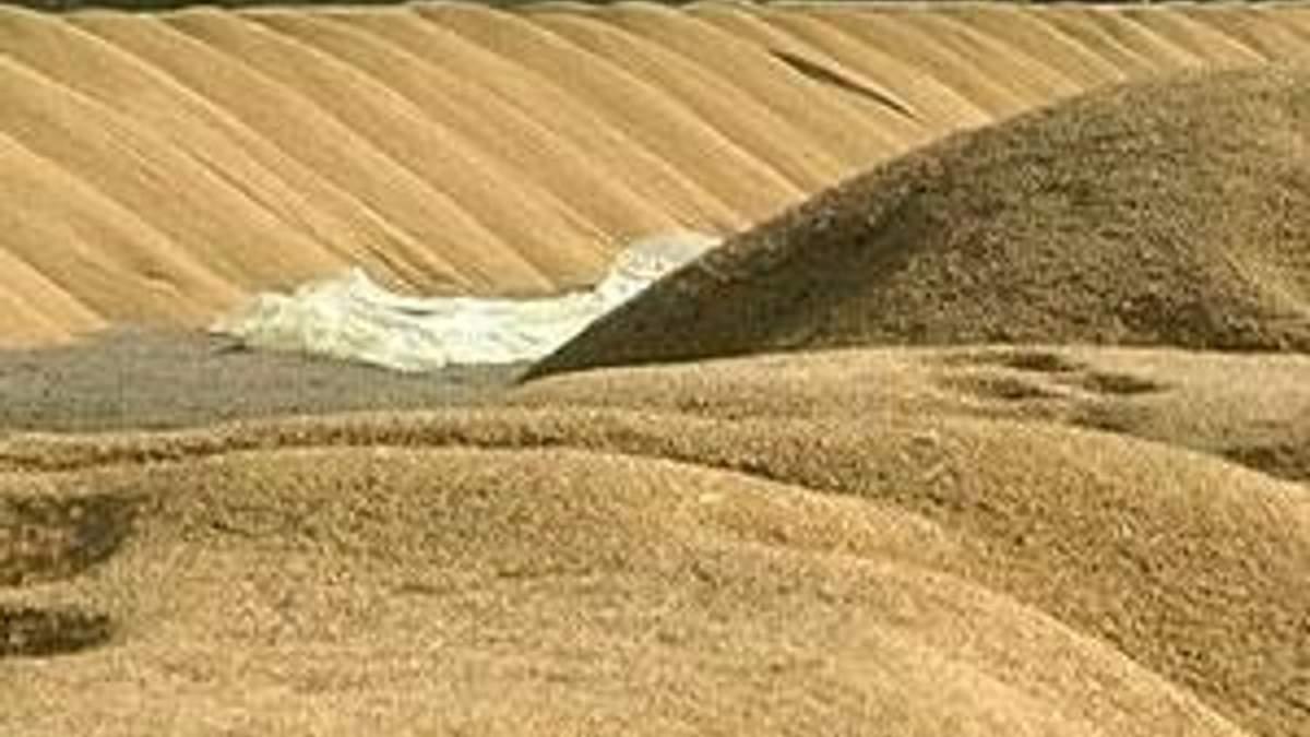 Аграрії вимагають нульових ставок ПДВ на експорт зернових