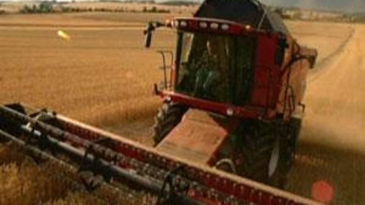 ООН прогнозирует высокие цены на зерно в следующем году