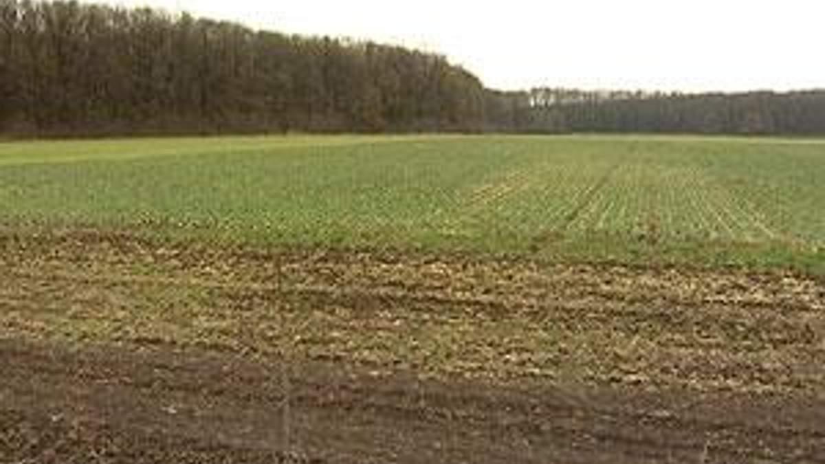 Эксперты: зерновые придется пересеять на 2,3 млн. га площадей
