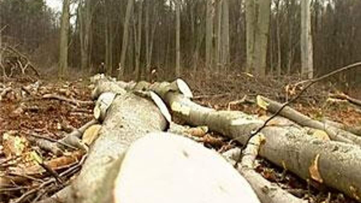 Уряд планує виділити 3-4 млн кубометрів лісу на біопаливо