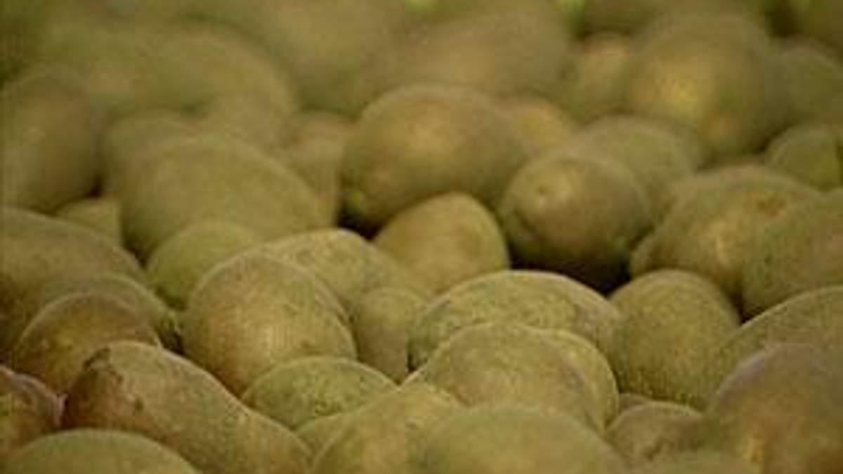 В Украине нет цивилизованного рынка картофеля