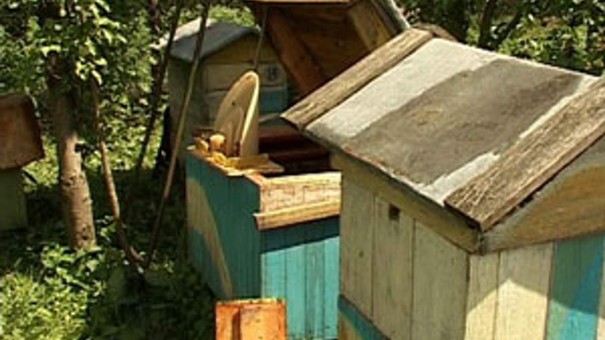 До виробників продукції бджільництва посилять вимоги