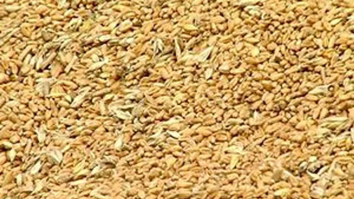 Урожай зерна в 2012 г. снизится до 42 млн. тонн