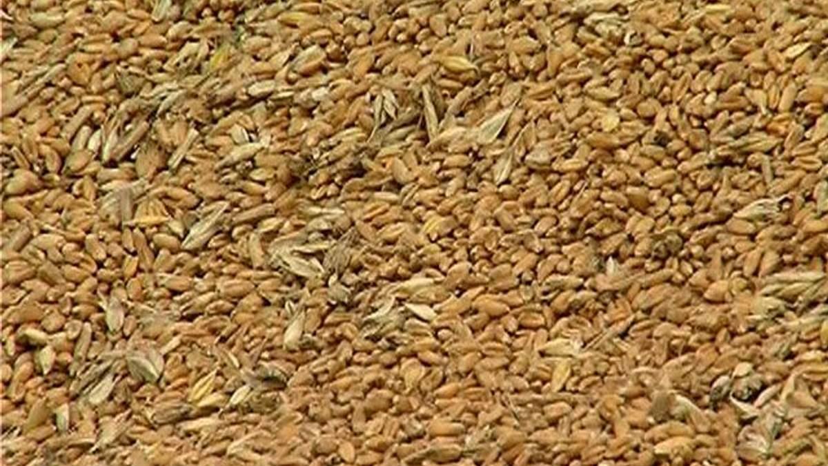 Мінагропрод прогнозує подорожчання зерна