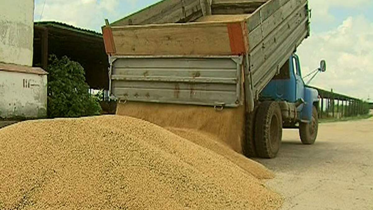 Аграрний фонд планує придбати 1,3 млн тонн зерна врожаю 2013 рік