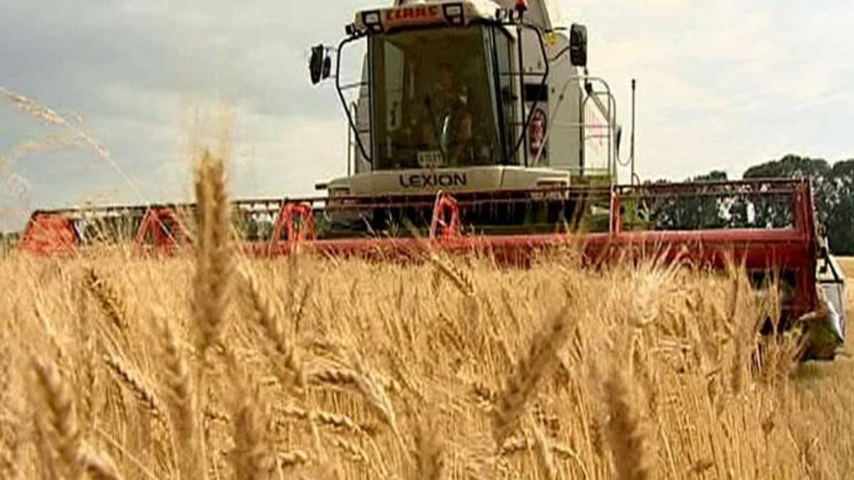 Украина собрала зерновые с 85% запланированных площадей