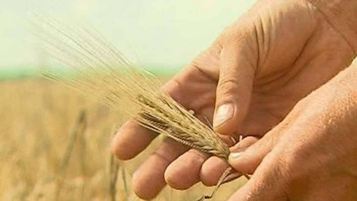 Льготное агрострахование введут лишь в 2013 году