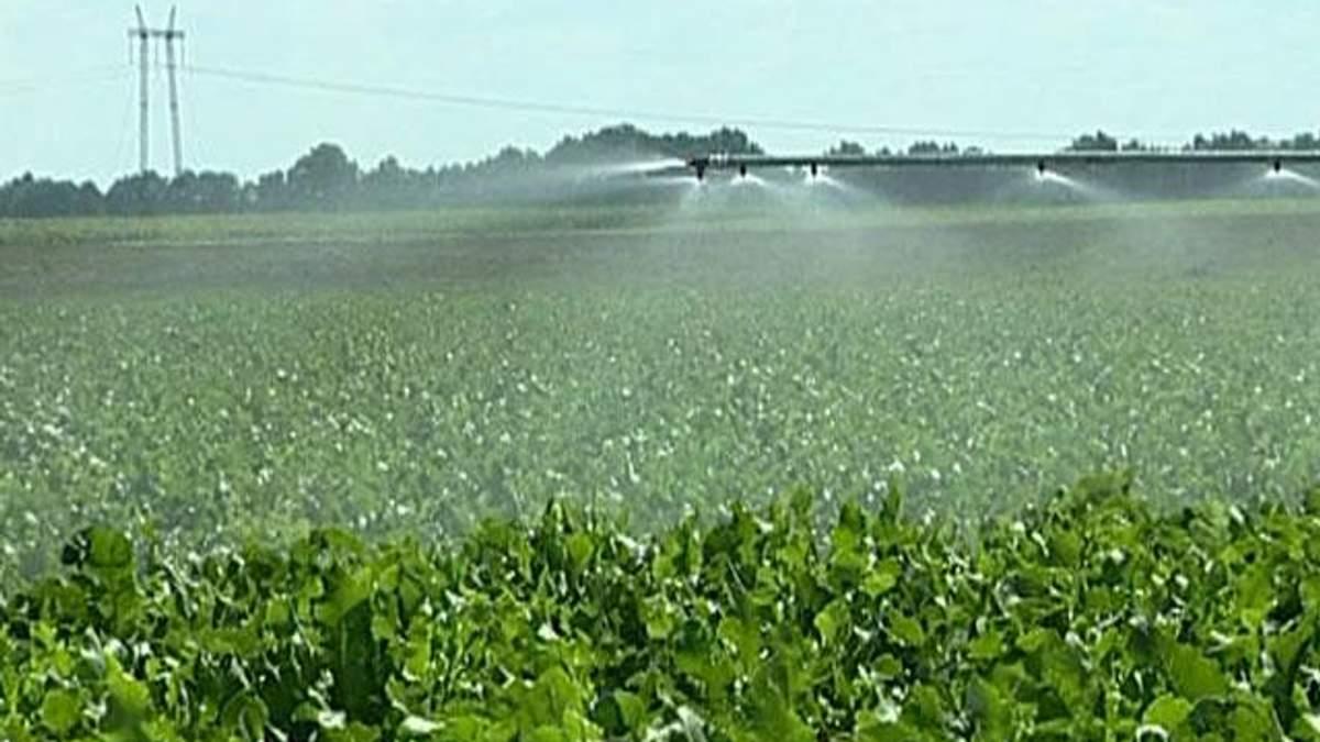 Украина экспортирует в ЕС 25% агропродукции