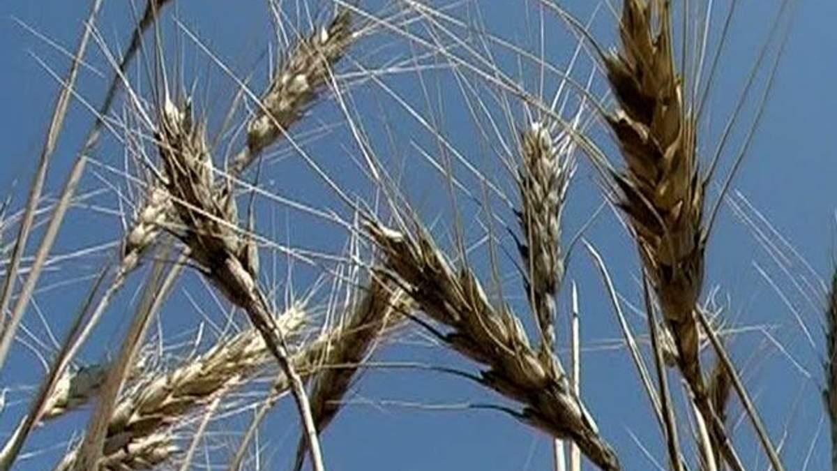 Уряд пропонує узаконити введення мит на продовольство