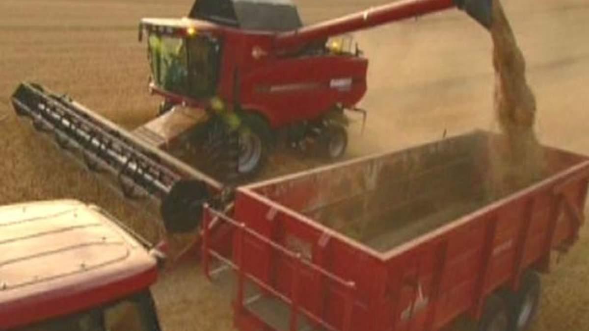 Мировые запасы зерна в этом году снизятся на 12%