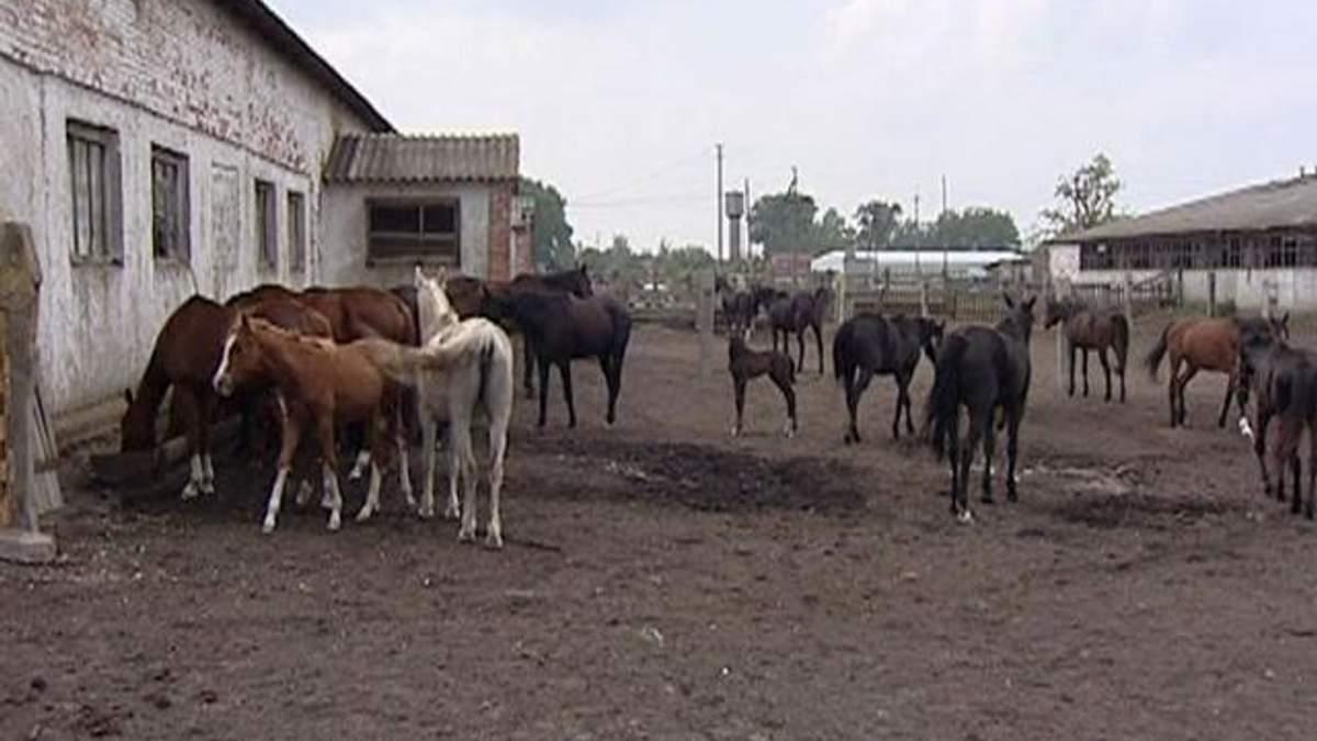 Україна скоротила виробництво сільгосппродукції на 4,5%