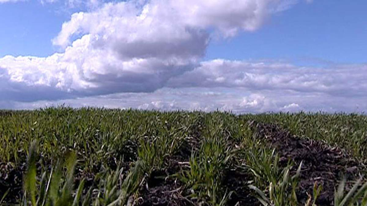 Мінагропрод України хоче ухвалити основні закони щодо ринку земель