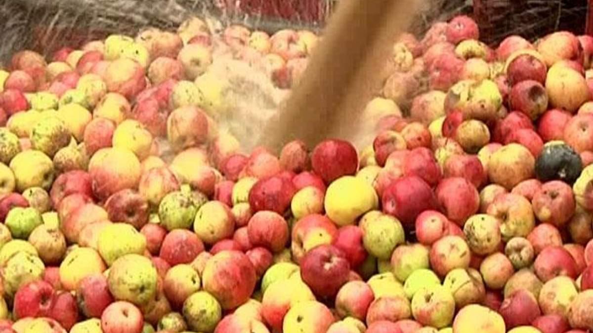 Україна встановила абсолютний рекорд із виробництва яблучного соку