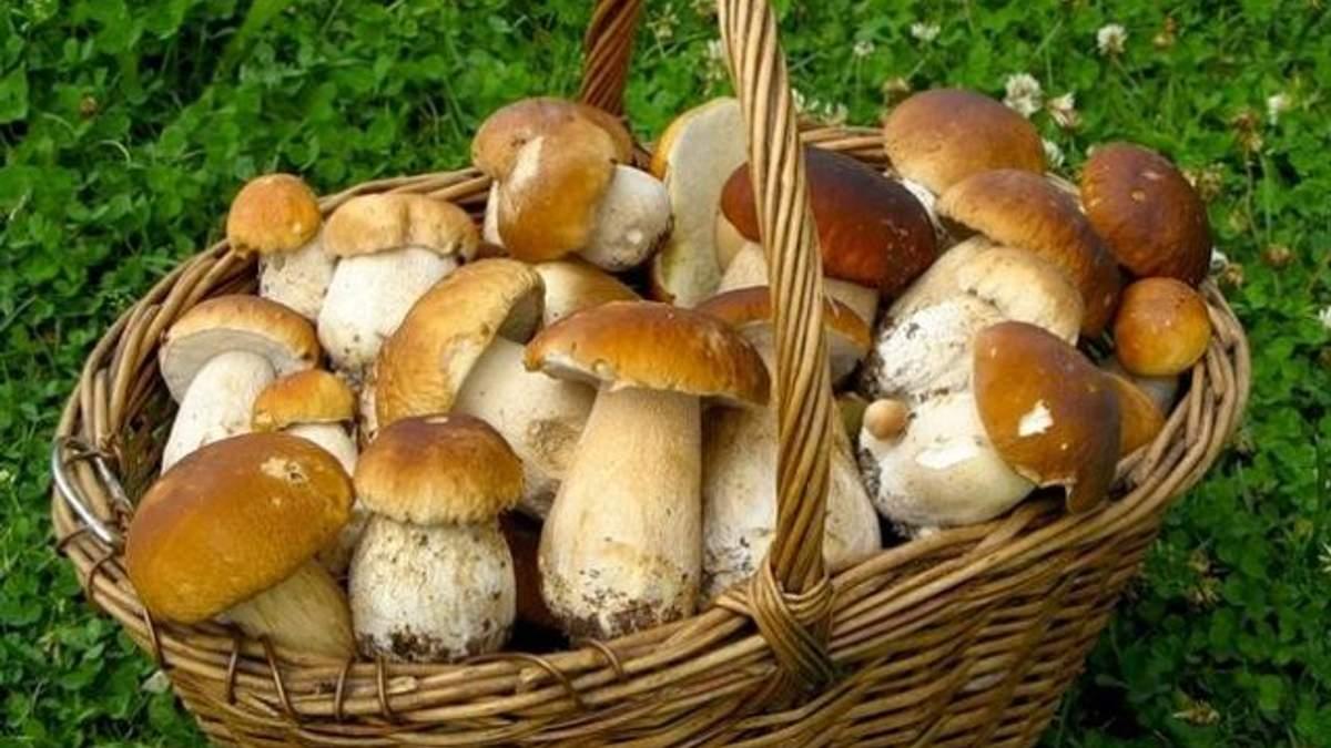 За гриби, ягоди і лісові прогулянки в Криму збиратимуть податки
