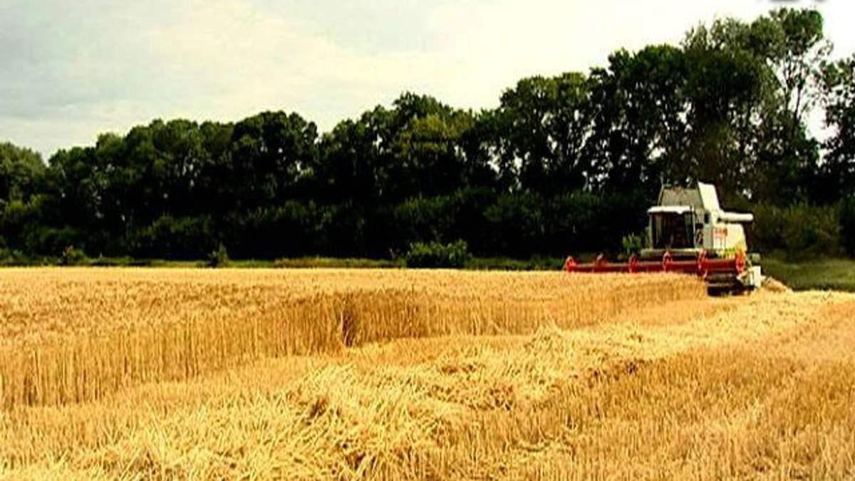 Украина может накормить хлебом более 200 млн человек, - зернотрейдеры