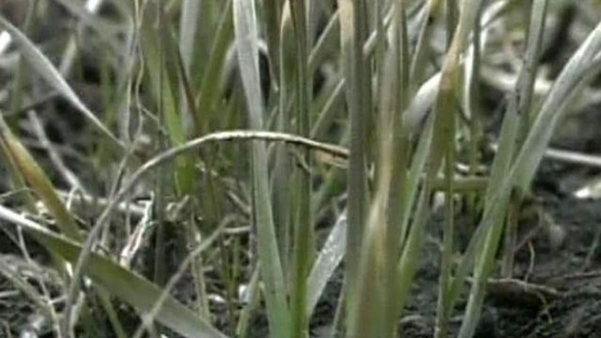 Україна збільшить експорт зерна в країни ЄС на 46% — Мінагрополітики