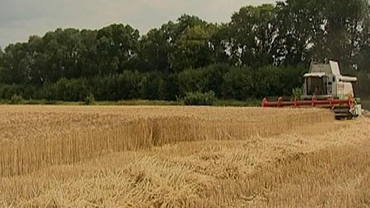 Україна може щорічно збирати 80-100 мільйон тонн зернових, – Швайка