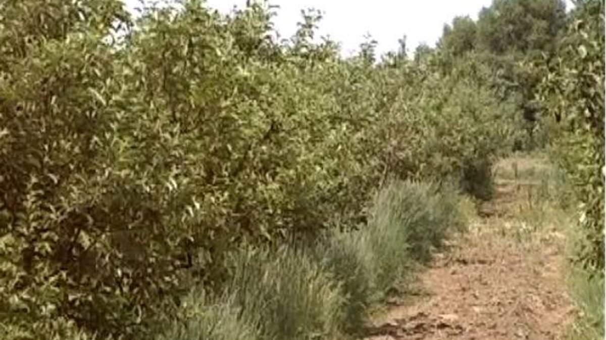На закладку новых садов выделят 100 млн гривен
