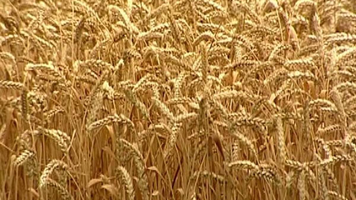 Спрощена реєстрація землі лише на папері: черги надалі залишаються , — сільгоспвиробники