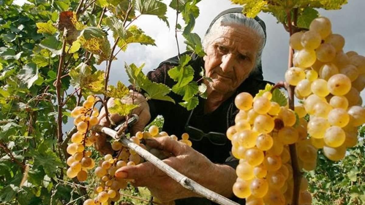 Грузія відновлює експорт овочів і фруктів у Росію