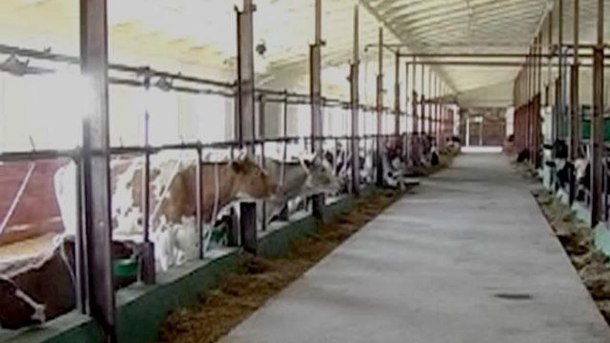 Українські аграрії шукають нові ринки збуту