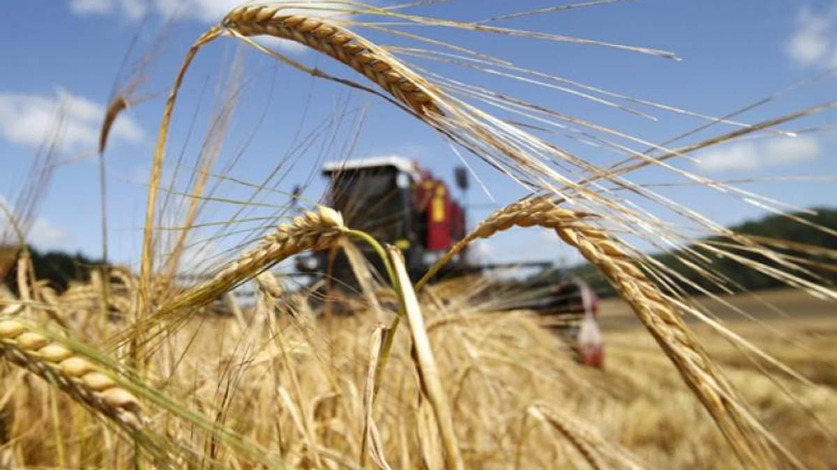 Україна за 5 днів 2018 року повністю вибрала квоти на експорт пшениці і кукурудзи в країни ЄС
