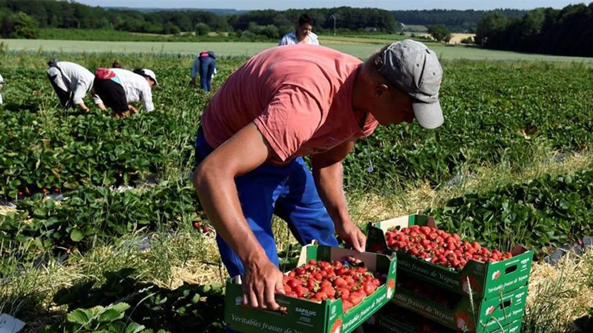 Польше трудно без дешевой рабочей силы, – СМИ