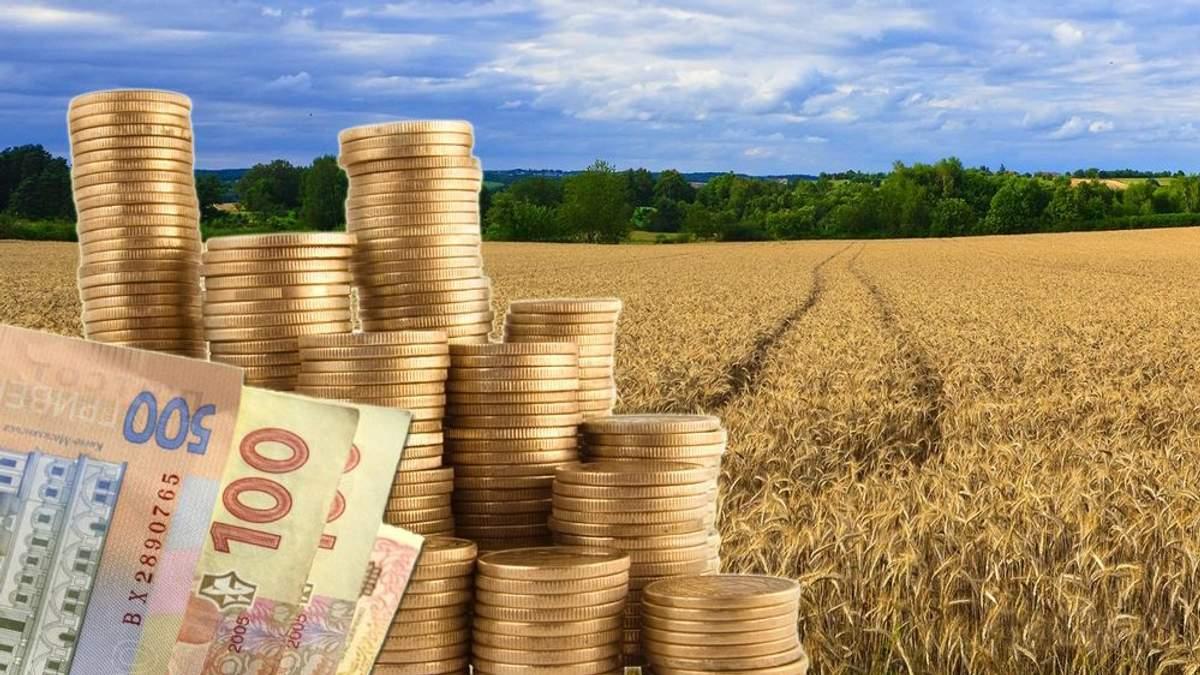 Сколько в год будет зарабатывать украинец на земле после снятия моратория: интересные данные