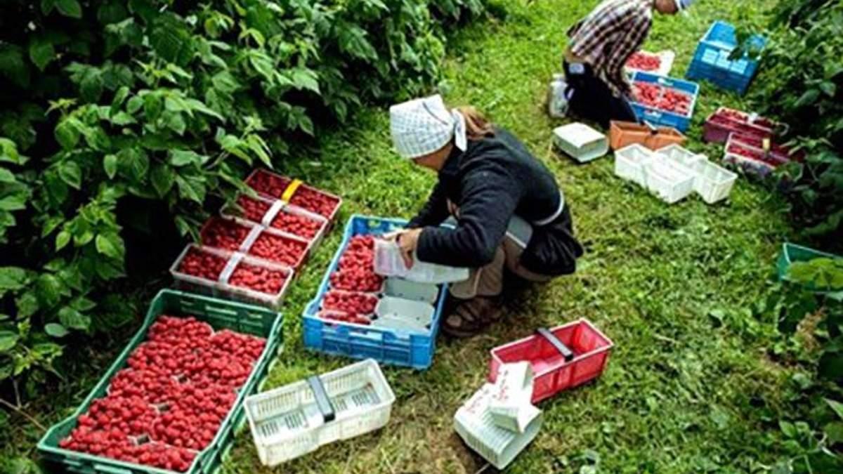 В Польше увеличили минимальную зарплату: сколько будут получать украинские заробитчане