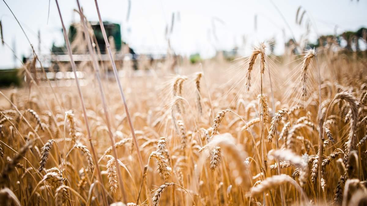 Україна – одна з тих, хто експортує до Євросоюзу найбільше агропродукції