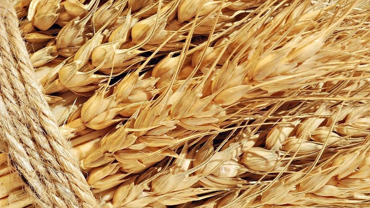 Автоматична індексація тарифів УЗ підірве всю систему ціноутворення на ринку зерна, – Горбачов