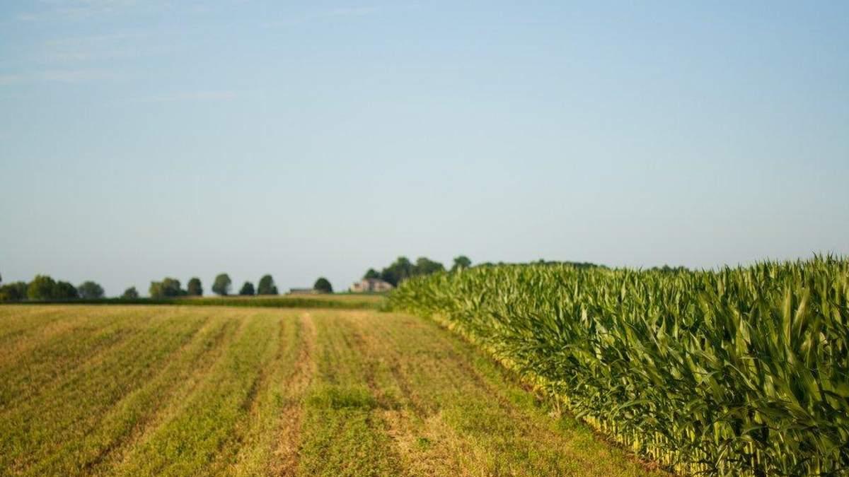 Зеленський анонсував земельну реформу до кінця 2019