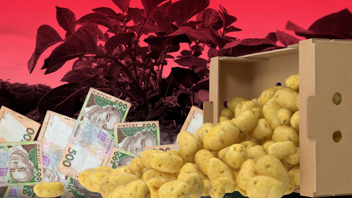 Ціна на картоплю 2019 – чому українська картопля дорожчає