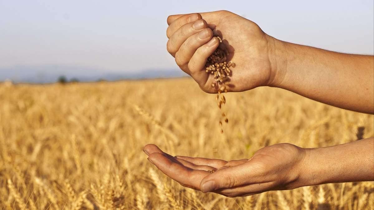 Зернові аграрії в Україні