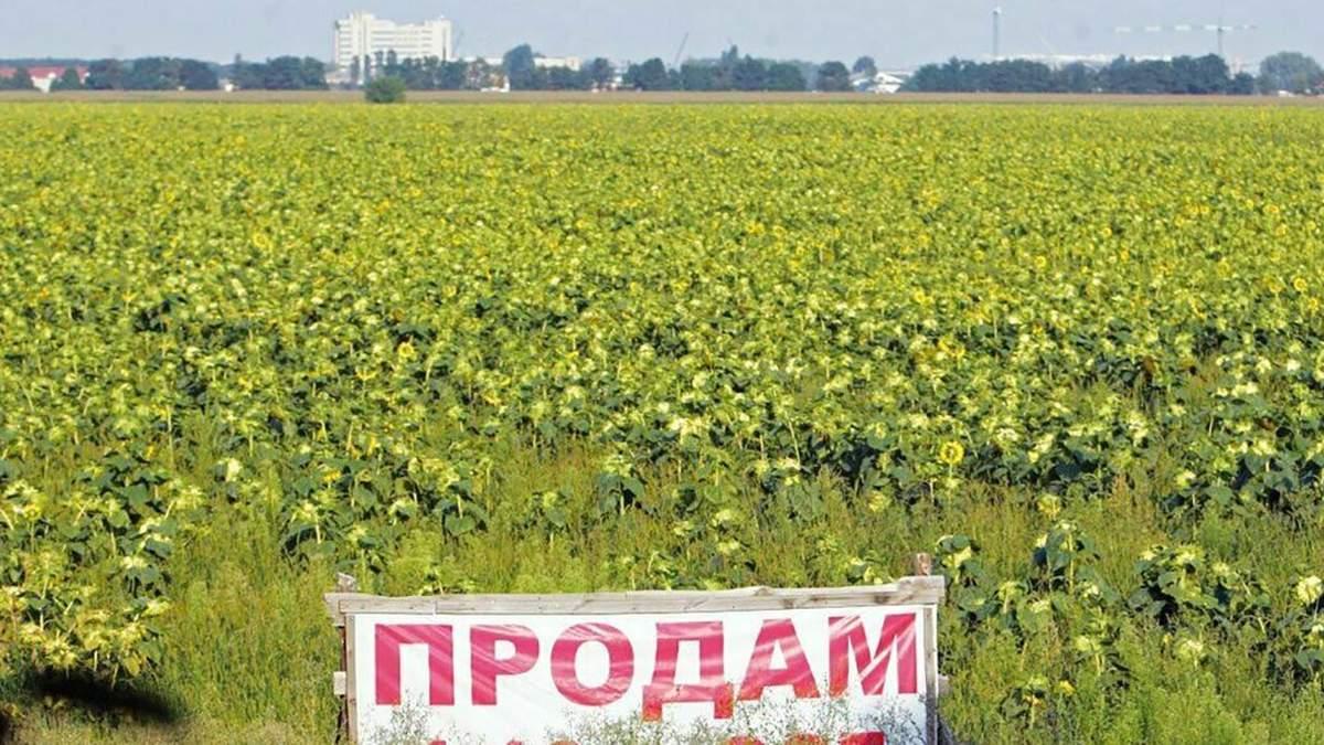 Рынок земли сельскохозяйственного назначения: куда пойдут деньги