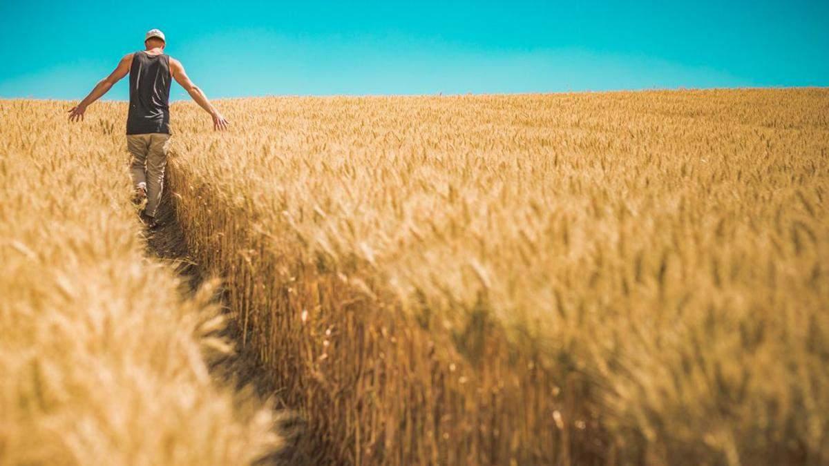 Закон про продаж землі в Україні: що Раді запропонував уряд
