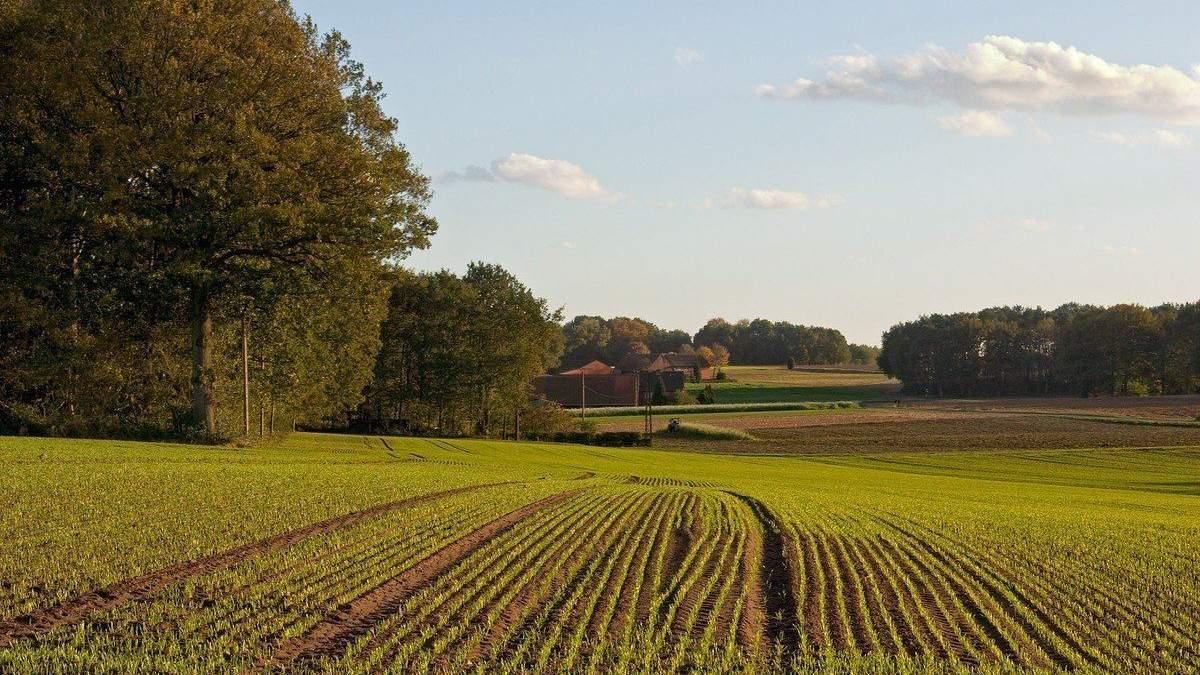 Закон о рынке земли: какие возможности и риски создал парламент