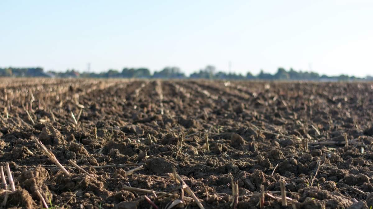 Ми не можемо дозволити навіть тиждень карантину в агрорегіонах, – експерт