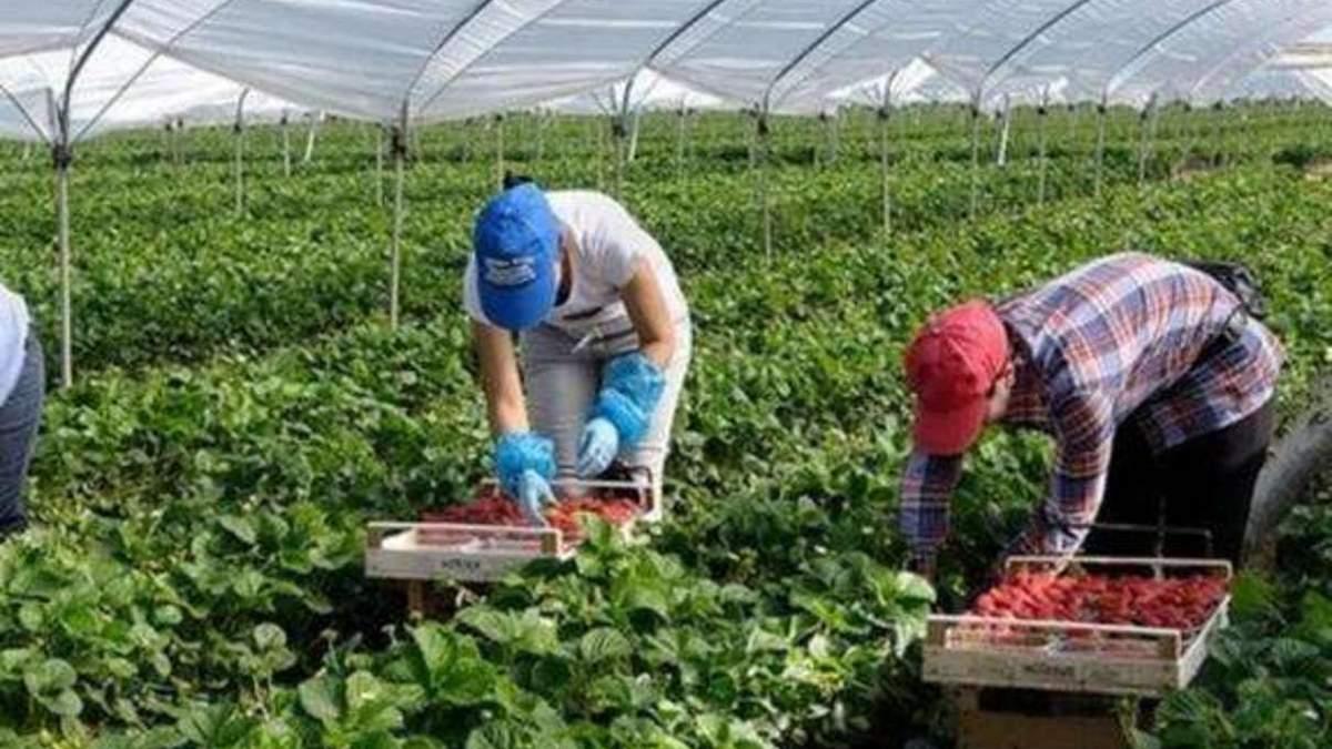 Украинских заробитчан приглашают на сезонные работы