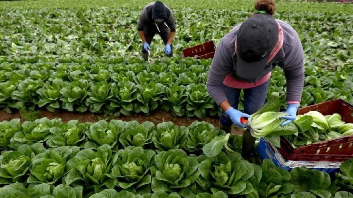 Правительство хочет договариваться с другими странами про поездки работников на сезонные работы