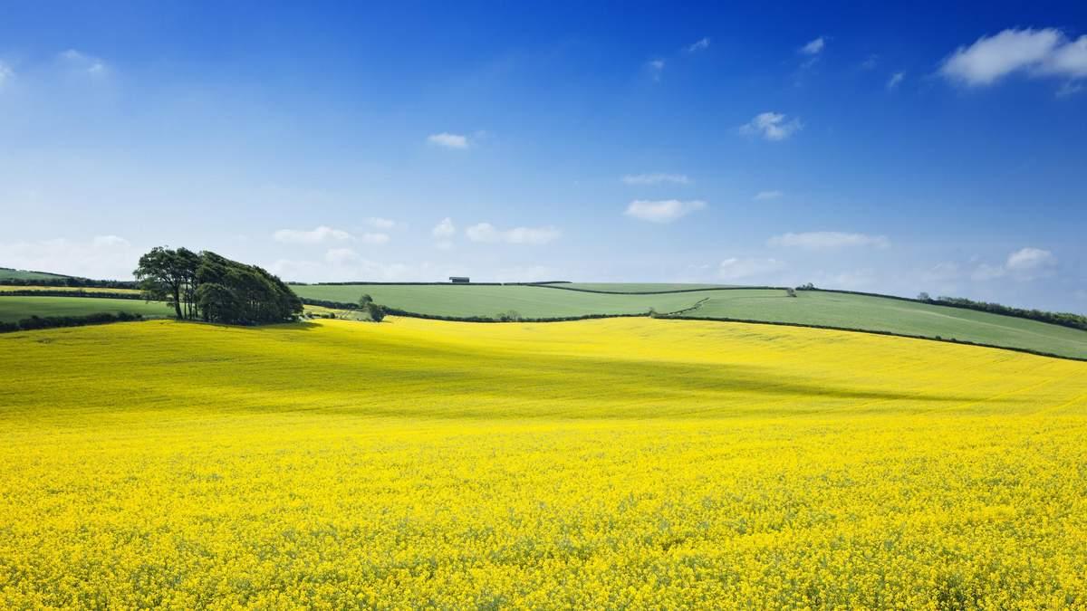 Насіння ріпаку в Україна 2020: вибір насіння озимого ріпаку та комплексний підхід