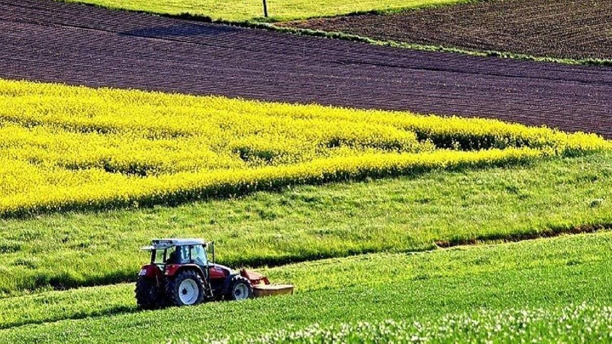 Почему честным фермерам не стоит бояться детенизации АПК