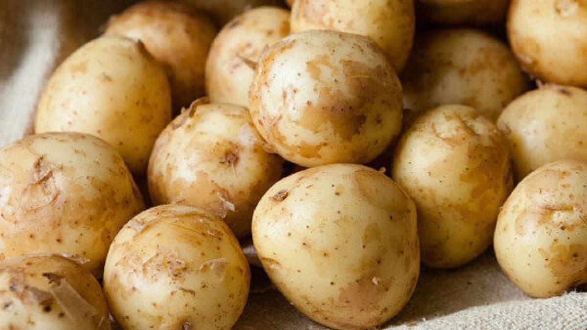 В Украине существенно подешевел молодой картофель