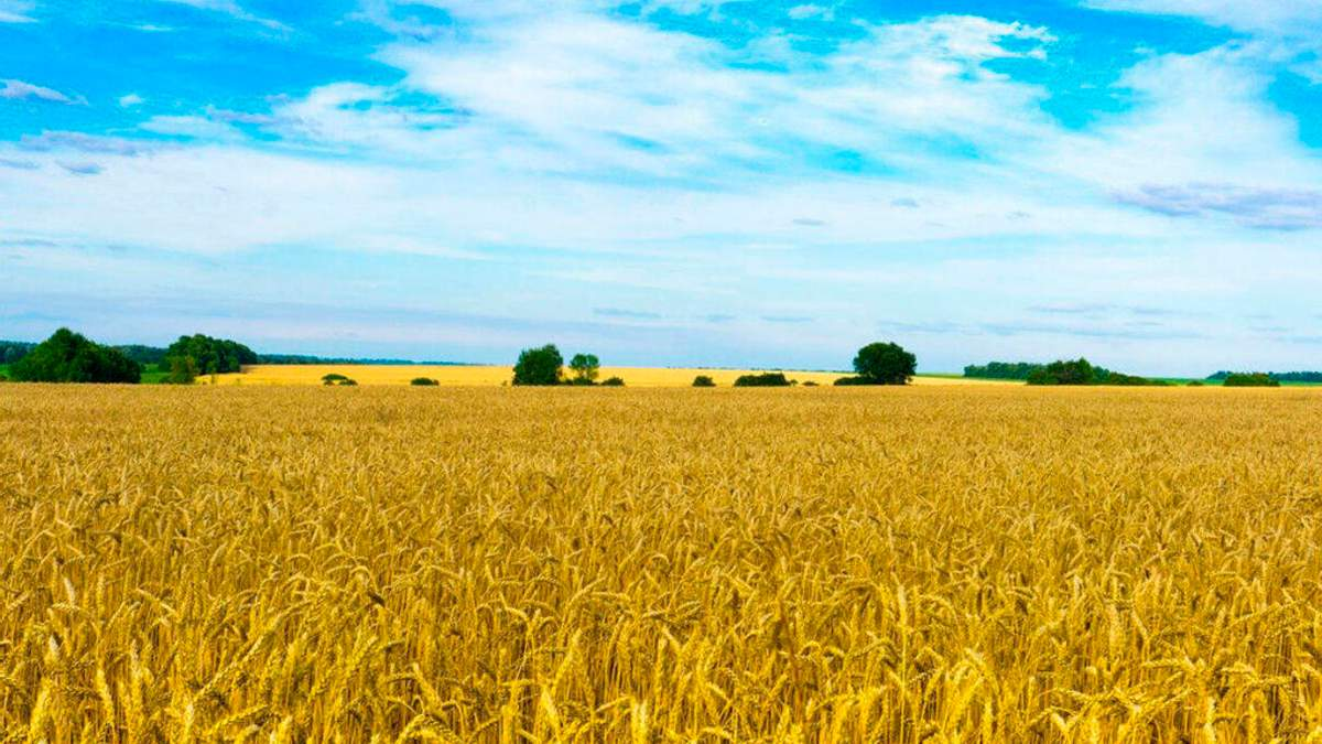 У Мін'юсті розповіли, скільки становитиме податок на купівлю землі