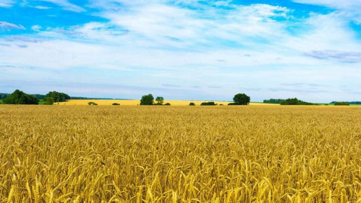 В Минюсте рассказали, сколько составит налог на покупку земли